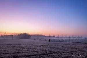 A frozen field with a row of trees during sunrise in Kiewit, Hasselt, Belgium