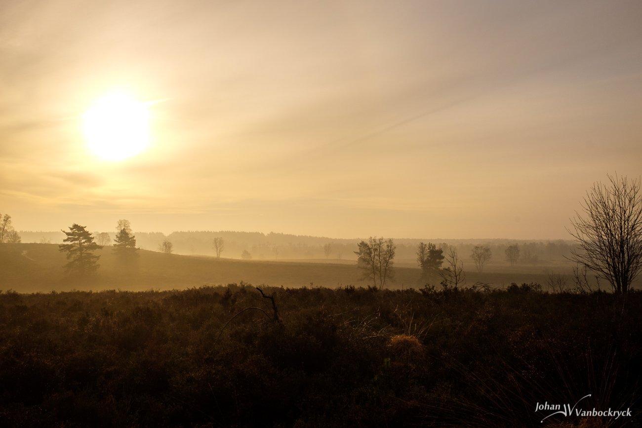 A layered lanscape during a misty sunrise on nature reserve De Teut in Zonhoven, Belgium