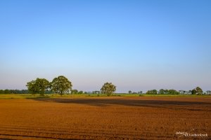 A freshly plowed field and some trees under a blue sky in Peer, Belgium