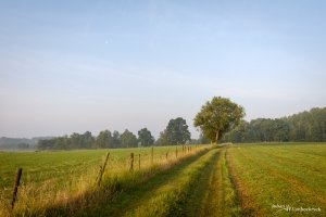 A tree at the edge of a field in Hasselt, Belgium