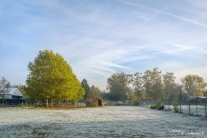 A frozen field with a small stable and a row of trees in Houthalen-Helchteren, Belgium