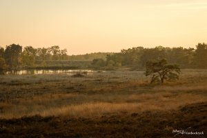The pond and fen of nature reserve De Teut in Zonhoven, Belgium during the golden hour