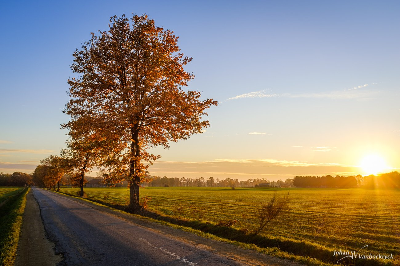 A tree by the road in autumn colors during sunset in Peer, Belgium