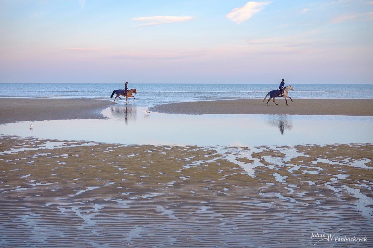 Two horses running on the beach of Koksijde, Belgium during early morning