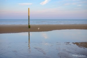 A tide pole and a single seagull on the beach of Koksijde, Belgium