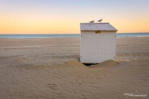 Two seagulls on a beach cabin during sunrise on the beach of Koksijde, Belgium
