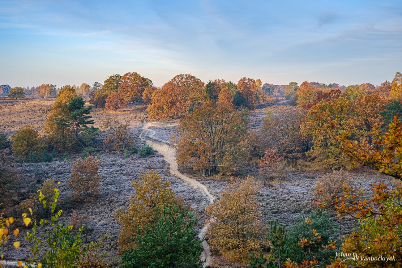 Frozen heather and trees in nature reserve Mechelse Heide in Maasmechelen as viewed from above