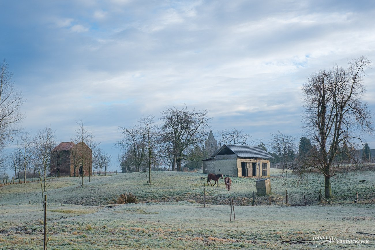A frozen field with horses, a stable and trees under a cloudy sky in Wellen, Belgium