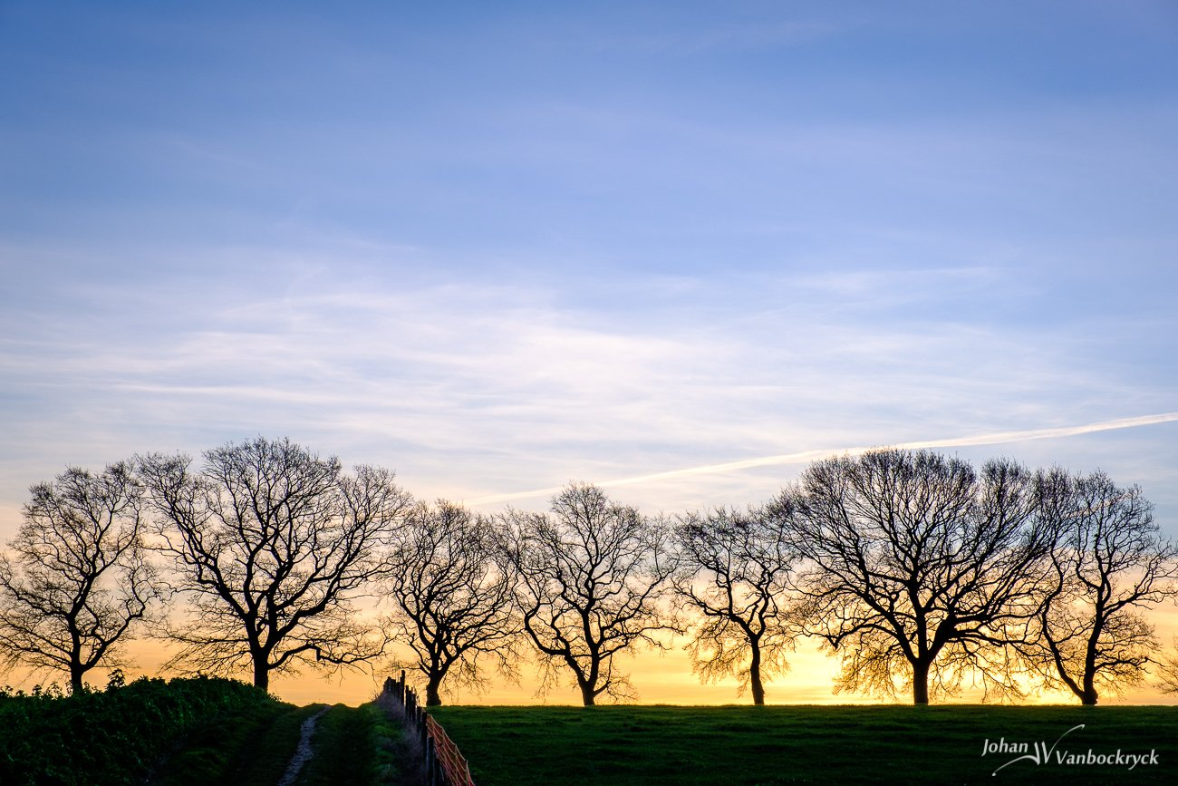 The silhouette of a leafless treeline against the sunrise at the edge of a field in Gulpen, the Netherlands