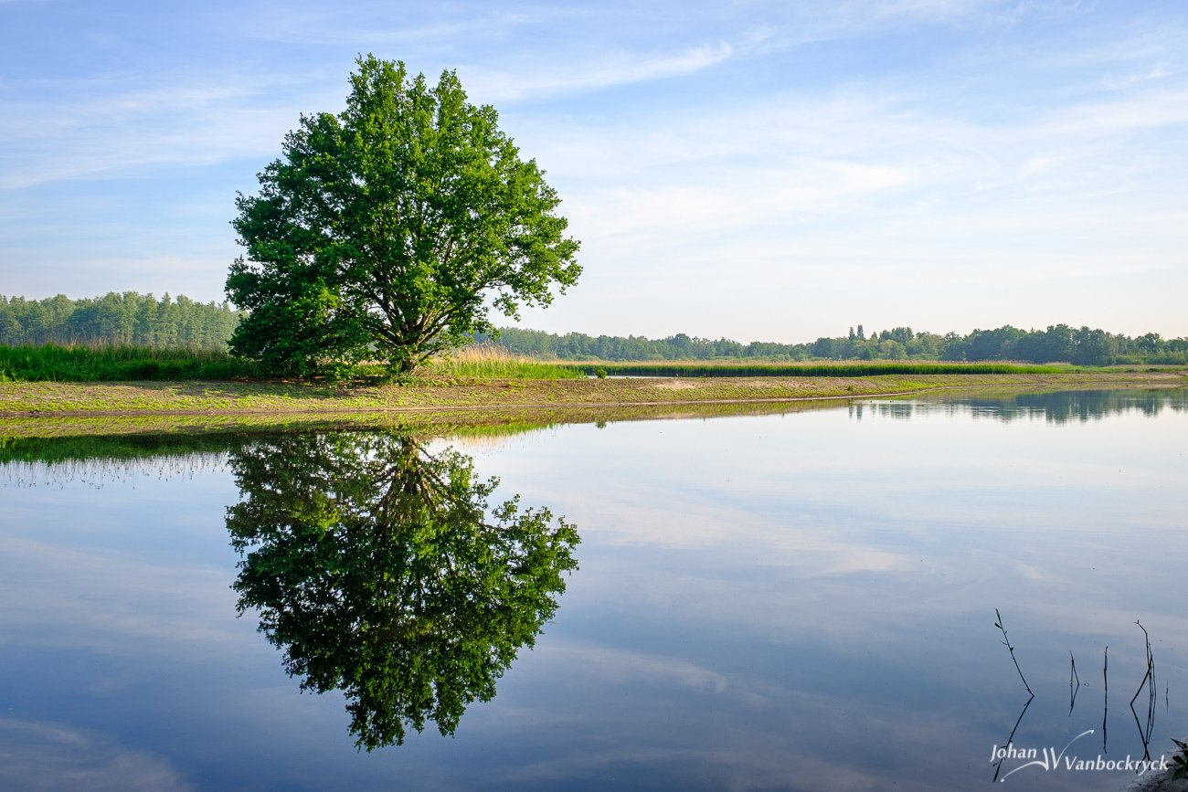 A tree with its reflection in the water under a blue sky in nature reserve De Platwijers in Zonhoven, Belgium