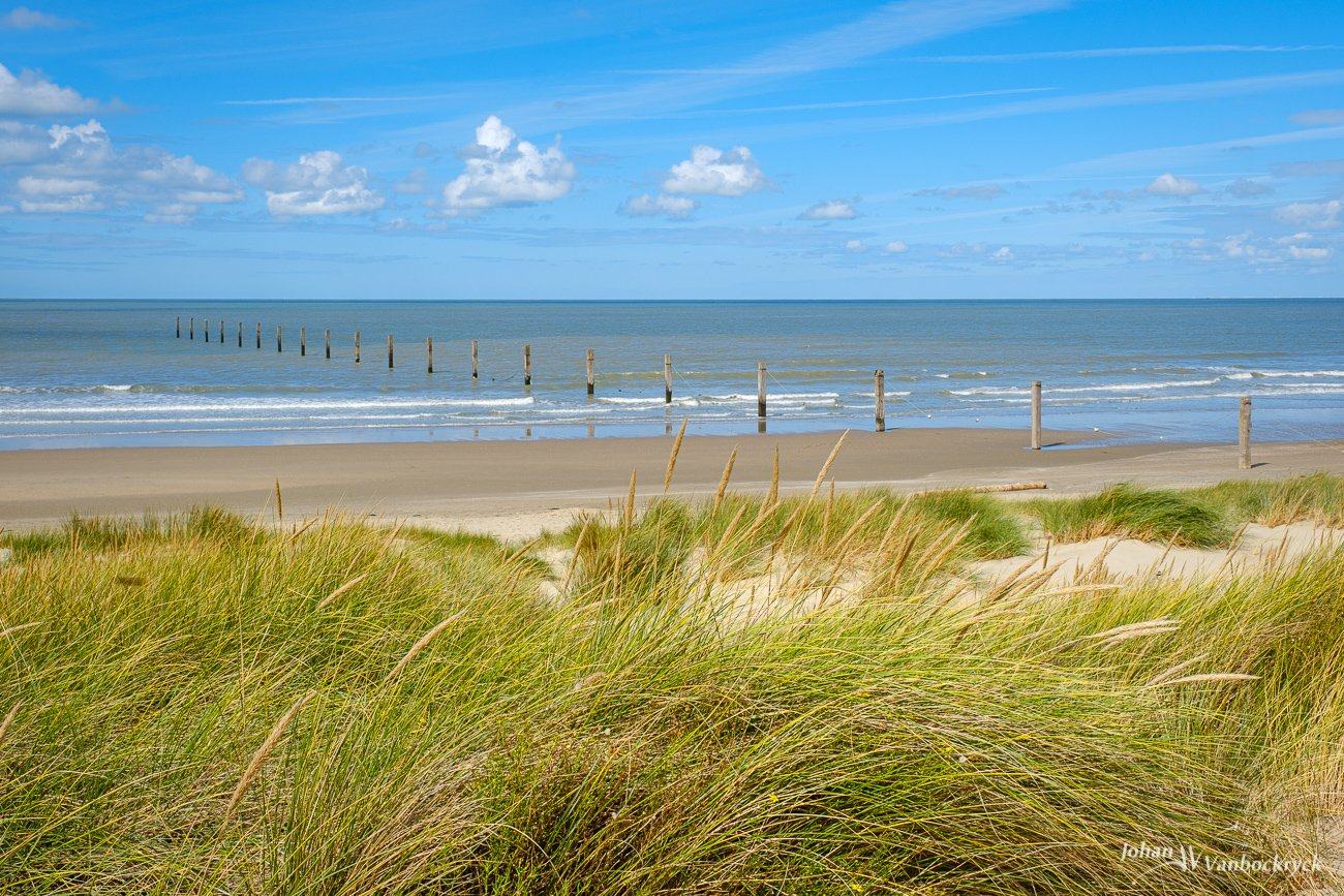 Wooden poles on the beach of Nieuwpoort, Belgium with the dunes in the foreground
