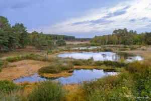 Ponds in nature reserve De Teut in Zonhoven, Belgium under a cloudy sky