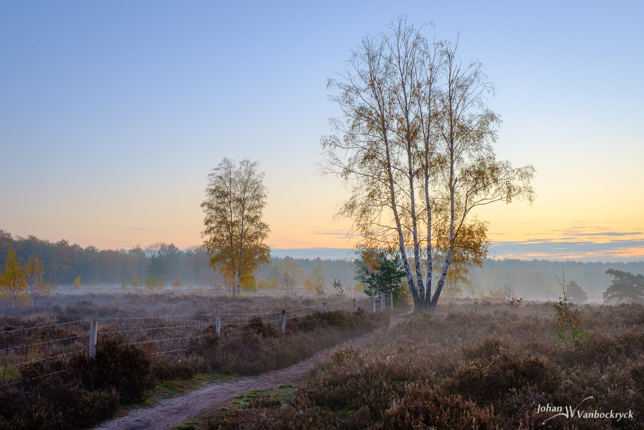 Trees with the last autumn leaves during a foggy November sunrise on nature reserve De Teut in Zonhoven, Belgium