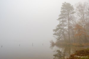 Trees in the fog at the edge of a pond on nature reserve De Teut in Zonhoven, Belgium