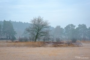 A tree on a cold winter day on nature reserve De Teut in Zonhoven, Belgium